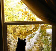 Mr Spock and the Snow by JoAnn Glennie
