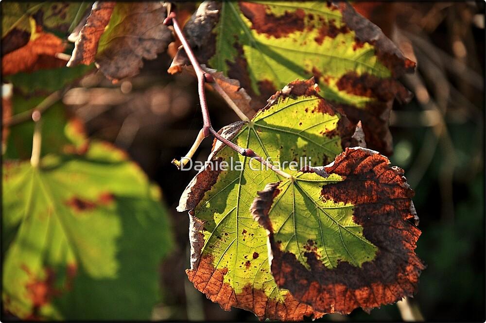 Autumn colours # 3  by Daniela Cifarelli