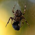 Spider and a fly by Barbara Anderson