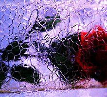 Ice Rose by Stephanie Sim
