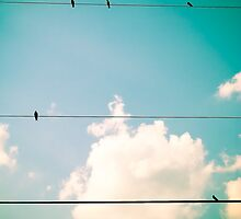 Birds on a wire by Courtney  McCoy