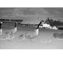 Ghostly Geese Photographic Print