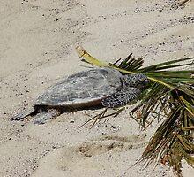 Turtle nap by Joni  Rae