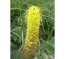 Spiky Lolly - N900 Photographic Print