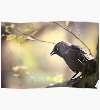 Bird sitting on a tree branch Poster
