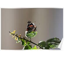 Butterfly 0331 Poster