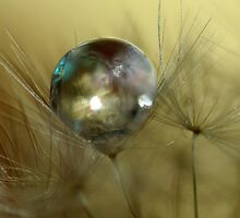 Droplet by Sharon Johnstone