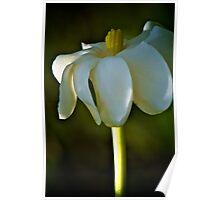 Ivory Gardenia Poster