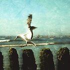 seagulls by hannes cmarits
