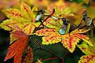 Ready For Fall. by Todd Rollins