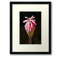 Pink Poker – Jan's Garden Framed Print