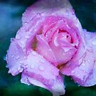Rose for a Lady by Russell Fry