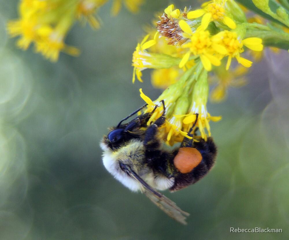 Soaking Up The Pollen by RebeccaBlackman