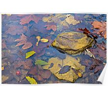 Indian autumn creek Poster
