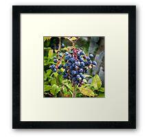 Blackthorn Berries Framed Print