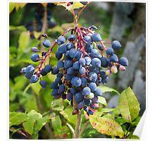 Blackthorn Berries Poster