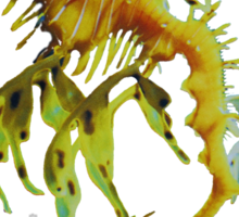 Leafy Sea Dragon Sticker