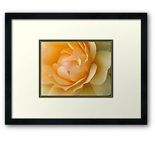 Yellow Rose Petals (1084 Views) Framed Print