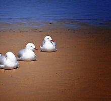 Seagulls  by JaninesWorld