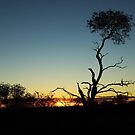 Sunset in the Bush II by pnjmcc