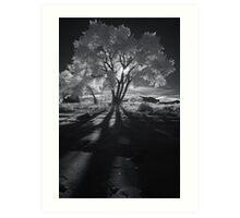Cottonwood Shadows, Part II Art Print