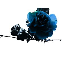Blue Rose on Barb Wire Photographic Print