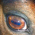 Eye by Mary Taylor