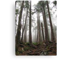 Foggy trees Canvas Print