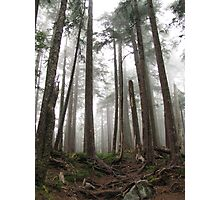 Foggy trees Photographic Print