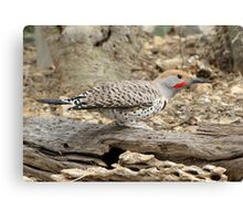 Gilded Flicker ~ Male Canvas Print
