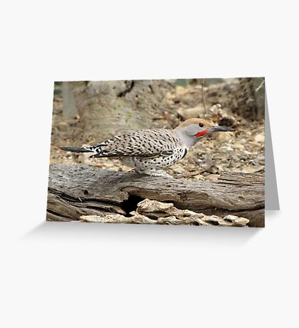 Gilded Flicker ~ Male Greeting Card