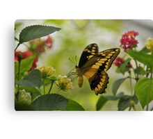 Thoa Swallowtail Canvas Print