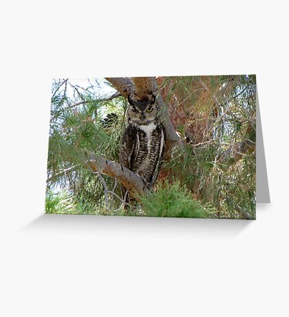 Great Horned Owl ~ Wild Greeting Card