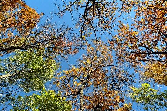 Autumn High by NatureGreeting Cards ©ccwri