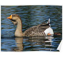 African Goose ~ Female Poster