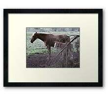 Cante & foal Framed Print