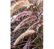 ELEFANT GRASS Photographic Print