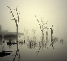 Morning fog - Lake Mulwala by Hans Kawitzki