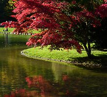 red autumn tree in Englischer Garten, munich by KSissy