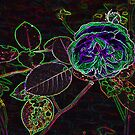 Abstract Rose by Trevor Kersley