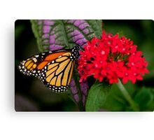 Monarch Butterfly - 10 Canvas Print