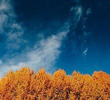 Trees by Tomáš Hudolin