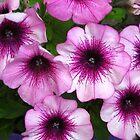 Petunia by Newstyle