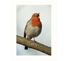 Robin Singing Art Print