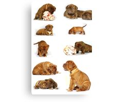 Dog chart Canvas Print