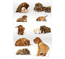 Dog chart Poster