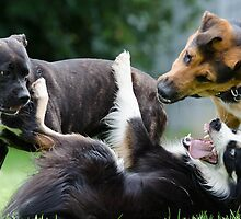 Dogs playing by franceslewis