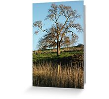 Tree at the property Greeting Card