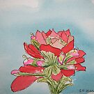 Indian Paintbrush pen and ink by Nan Henke