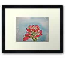 Indian Paintbrush pen and ink Framed Print